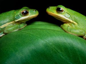 The frogs are just here because I was talking about St. Patrick's Day
