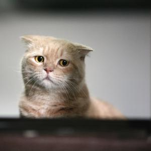 Cat that looks distraught
